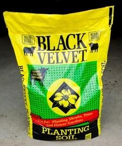 Black Cow - Black Velvet - Planting Soil