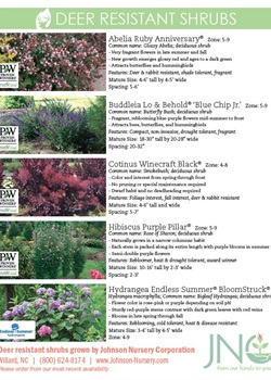 Deer Resistant Shrubs Chart