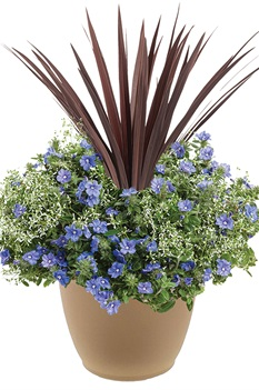/Images/johnsonnursery/product-images/Blue-Frost-combo-website_2c702fzne.jpg