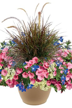 /Images/johnsonnursery/product-images/Carolina-Beach-combo2-website_iex4bogj8.jpg