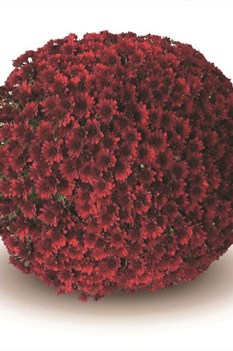 /Images/johnsonnursery/product-images/Como_red§540x540_hpehx3oco.jpg