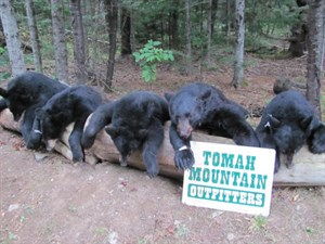 Tomah Helps You Get Your Bear!
